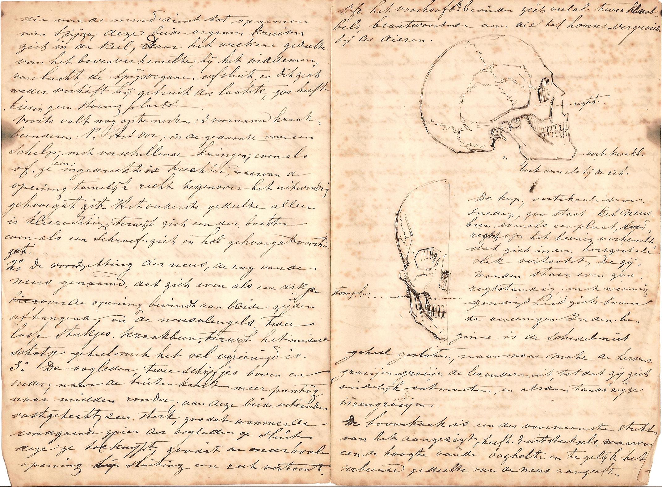 Anatomie vh hoofd