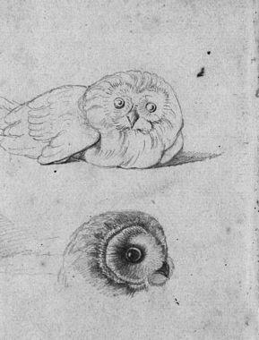 Studie van een uil