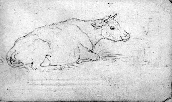 Rustende koe