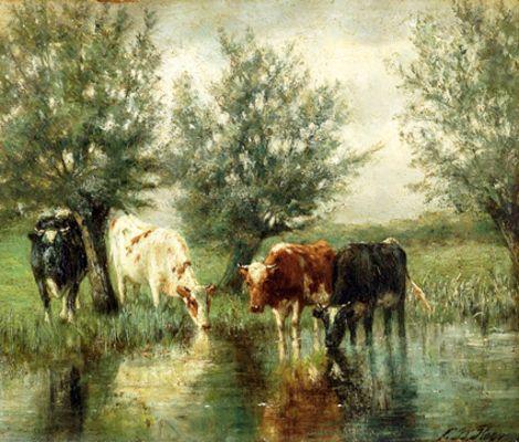 Koeien in de plas