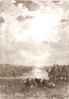 Koeien bij een hek