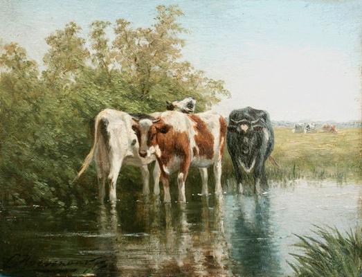 Koeien in de sloot