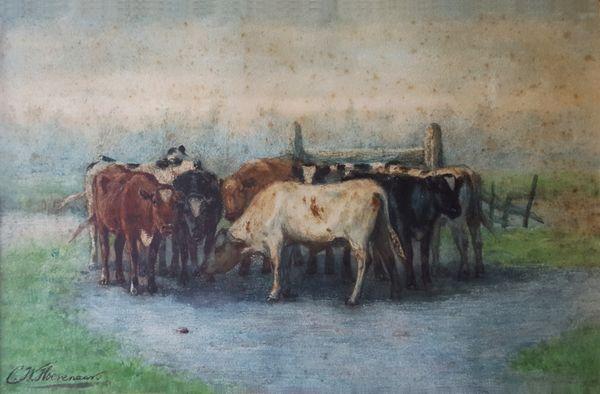 Koeien bij de voederbak