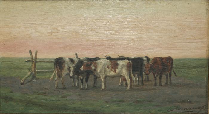 Koeien bij het hek