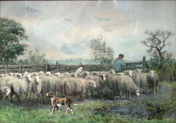 Kudde schapen met herdershond
