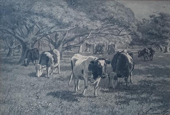 Koeien op het land