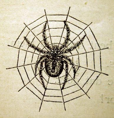 Een spin