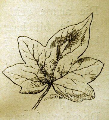 Een boomblad