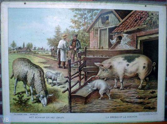 Het schaap en het zwijn