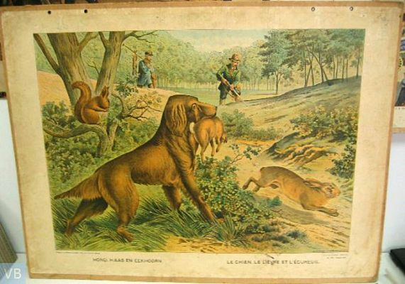 Hond,haas en eekhoorn