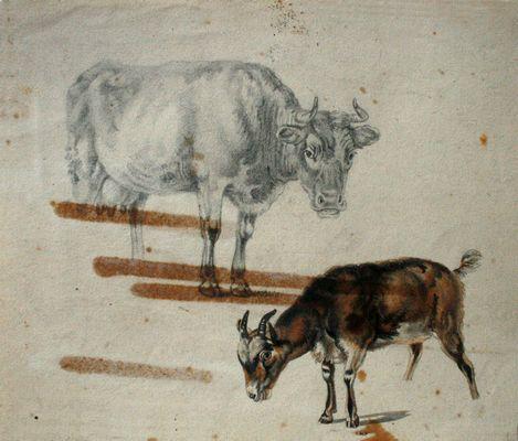 Een koe en een geit