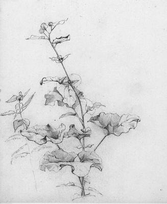 Een plant