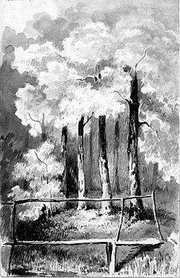 Bomen en bruggetje
